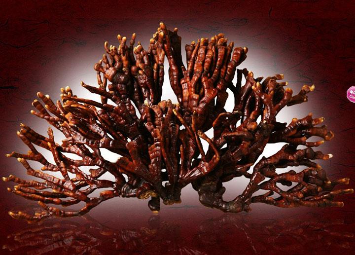Cách nấu nấm linh chi sừng hươu Nhật Bản