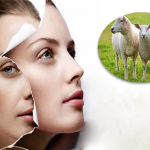 Tác dụng của nhau thai cừu trong sức khỏe và làm đẹp-1
